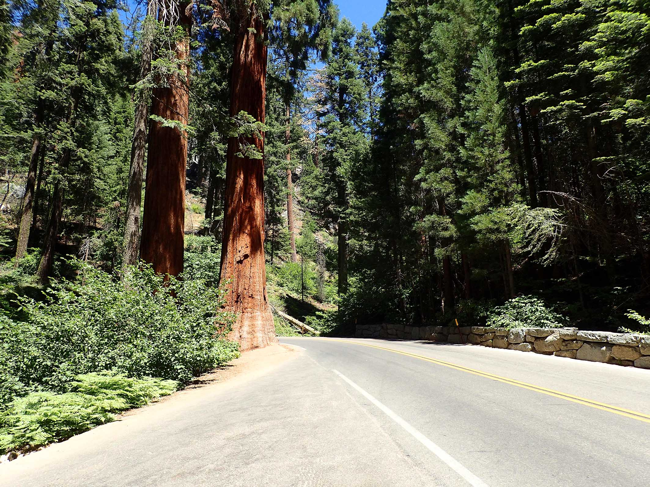 Generals Highway Sequoia National Park